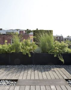 Piante terrazze